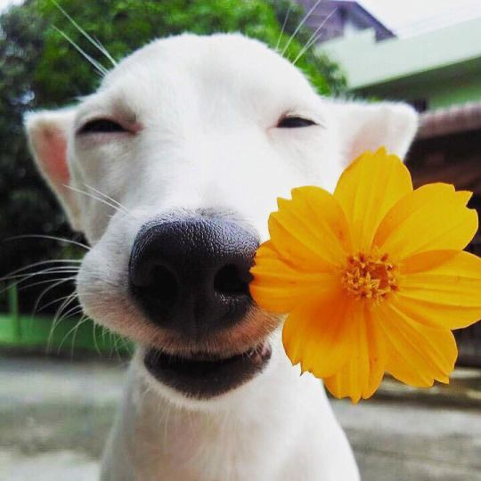 dogs and flowers are the ideal combination
