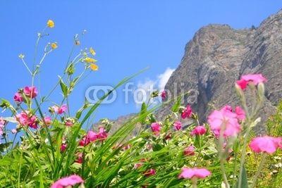 allergie allergisch alm alpen alpenblume atmen bergluft bergwiese blau blumenwiese blütenmeer blütenpollen durchatmen einsamkeit flora frische gräser gräserpollen klar natur naturschutz piemont pollenallergie pollenflug rein ruhe seealpen stille wiese wildblumen