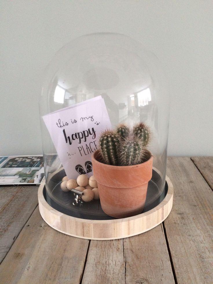Cactus in stolp @vereenster