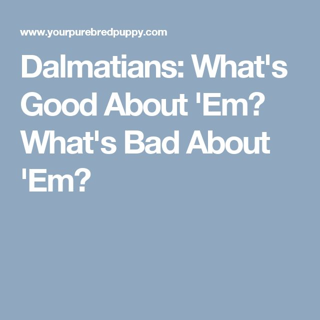 Dalmatians: What's Good About 'Em? What's Bad About 'Em?