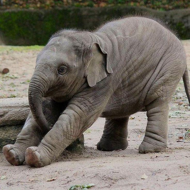 Картинки смешные со слонами, картинки трандуил