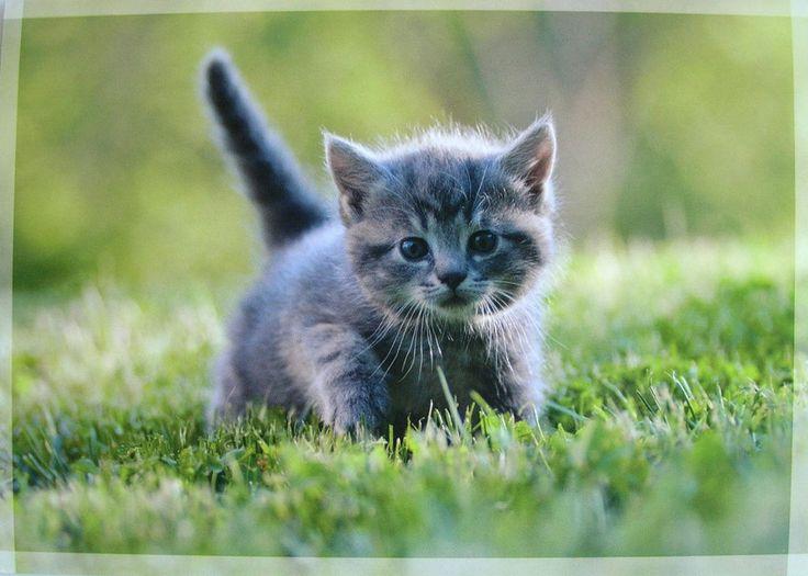 Gray Kitten in Grass Cute! Grey kitten, Tabby kitten