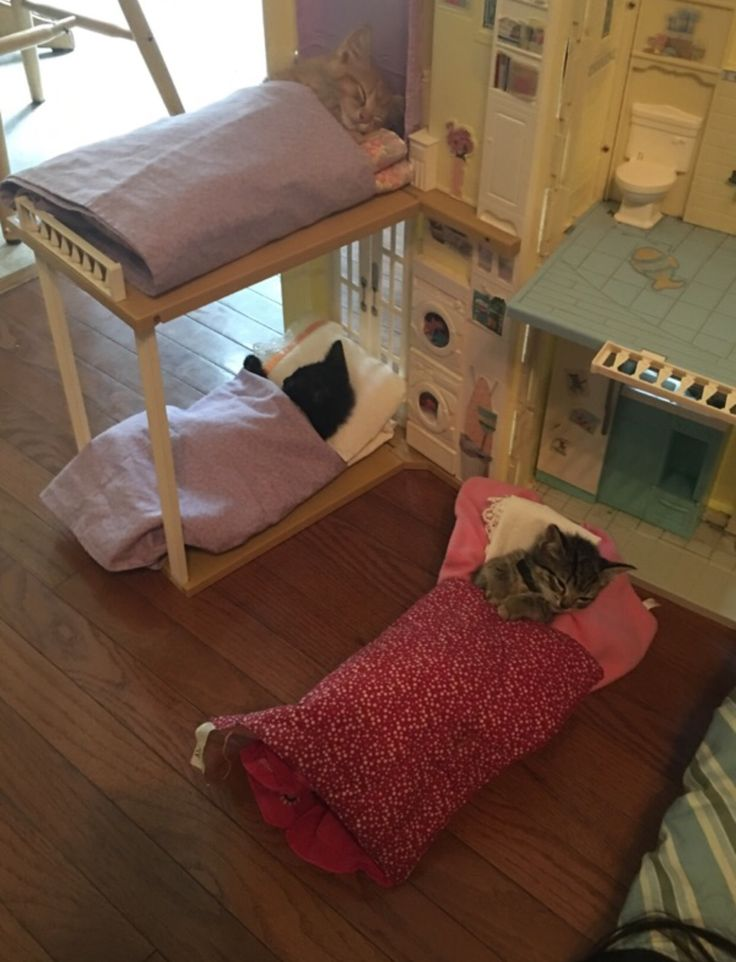 so my little cousin decided to put our cats into her dollhouse