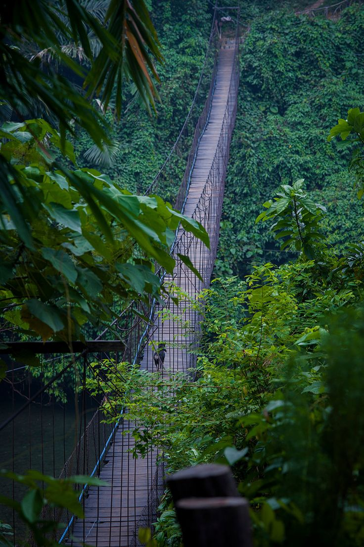 "Tangkahan, Sumatra ""The Canyon bridge"" door Morphological op Etsy"