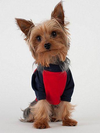 Cute! Navy & Red Poly-Cotton Dog Raglan | American Apparel