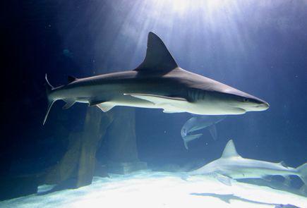 The Sea Life Aquarium Sharks Summer 2012 Production