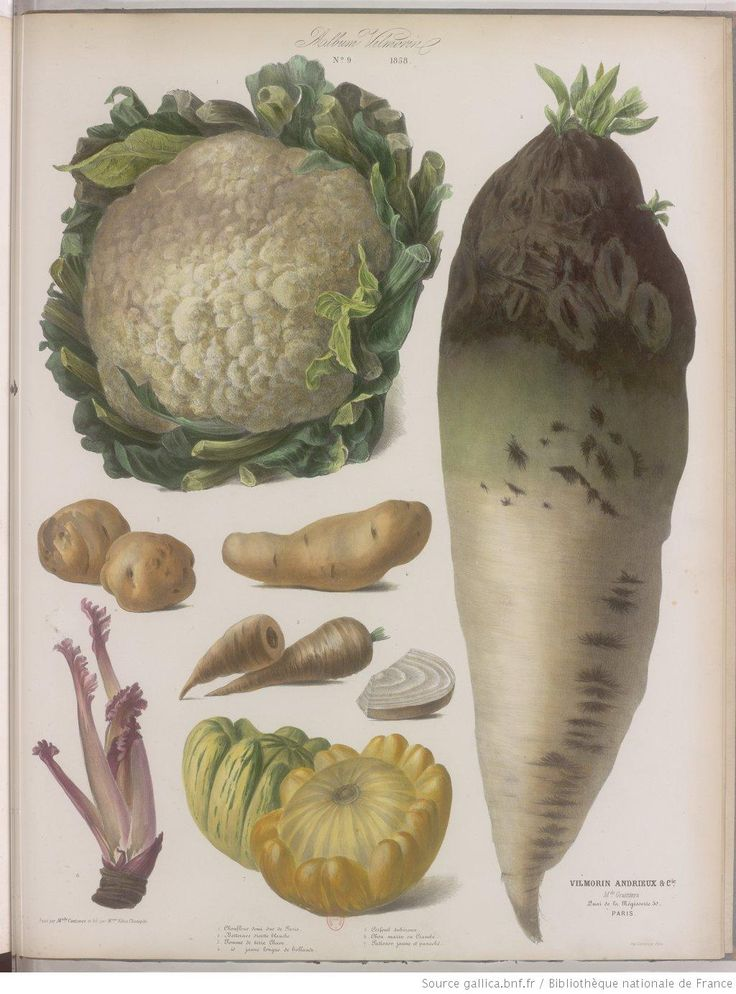 250 curated vegetal ideas by arodesun vegetables root for Plante annuelle