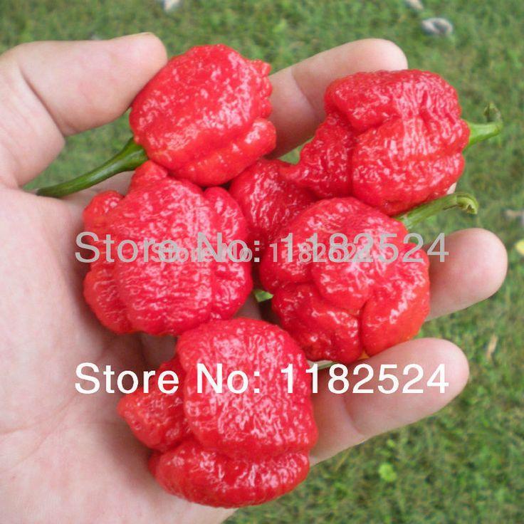 Горячих перец - тринидад моруга скорпион перец семена овощных культур ( 100 семена )