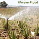 Nous sommes fiers de posséder nos propres champs d'Aloe Vera ainsi que de contrôler nos chaînes de la culture jusqu'à la distribution. #FOREVERPROUD De la plante à vous >> https://www.foreverliving.fr/notre-aloe.html