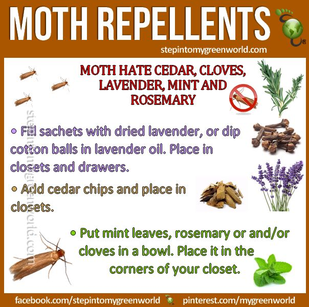 best 25 moth repellent ideas on