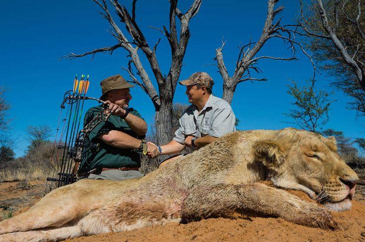 MAL - Esta leona murió con el arco y la flecha por Steve Sibrel, a la izquierda, en una granja en la provincia del Noroeste, Sudáfrica
