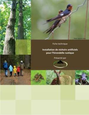 Comment aider l'hirondelle rustique. barn swallow guide