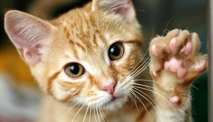 3 Problemas respiratorios en Gatos, reconoce Cada uno de ellos.