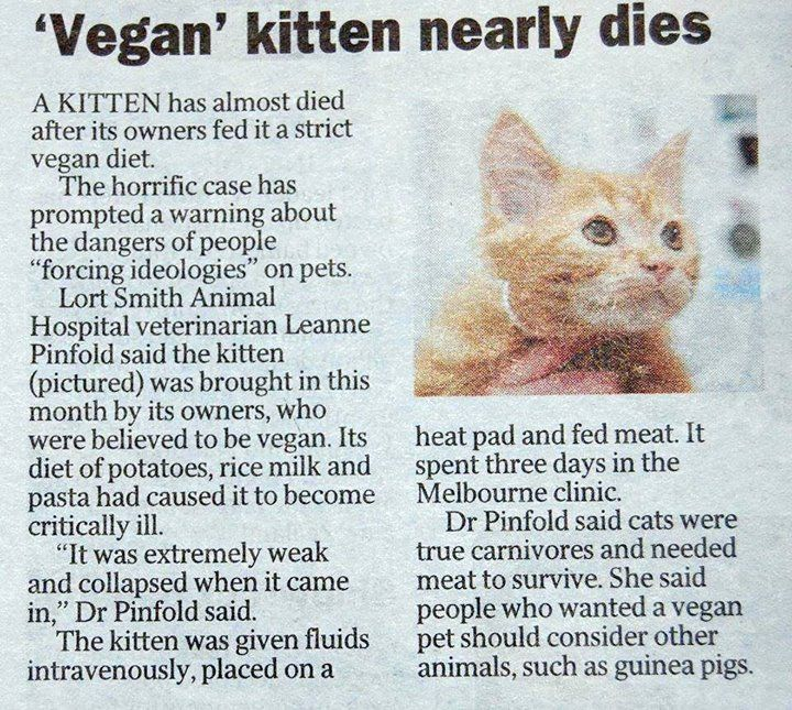 A reminder...cats are carnivores. Vegan cat, What cats
