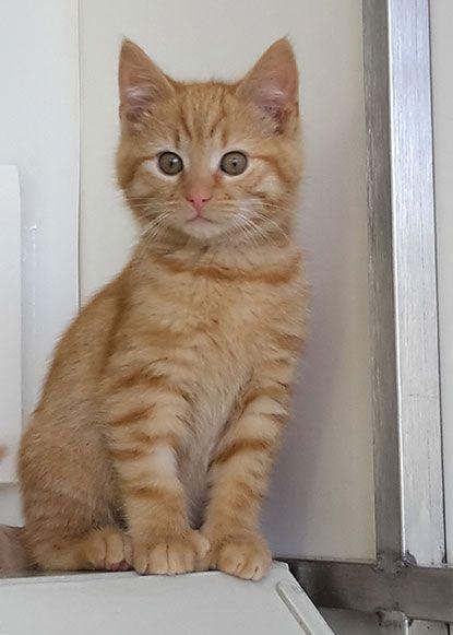 58 best Polydactyl cats images on Pinterest | Polydactyl ...  58 best Polydac...