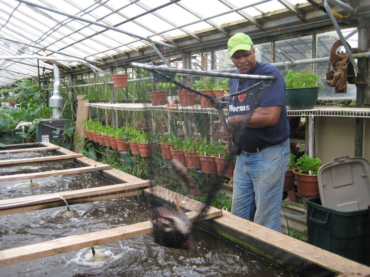 Growing Power raises 100,000 fish and 1 million pounds of food year-round on just 3 acres