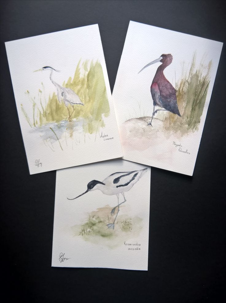 Watercolor Paintings | Bird collection no.2 | Handmade | Home Decor | Gift | Sizes: Height 25cm X Width 17.5cm