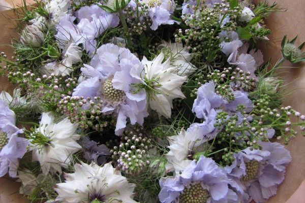 Pastel colours make for a lovely soft bouquet. Summer time Scabiosa and Nigella