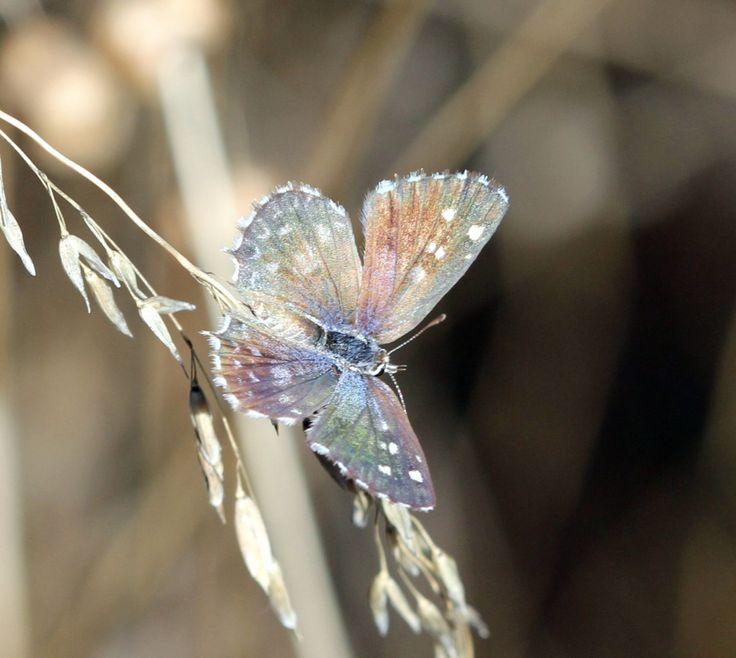Butterfly at Fynbos Estate