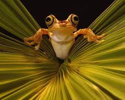 Image result for funny wild animals