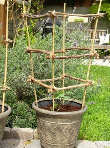 Tomato cages made with twigs and sticks