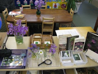 Flower arranging in the practical life area, still life drawing in the art area, identification of wildflowers and wildflower bingo in the language area, parts of a flower and leaf identification in the science area, plus lots of books to do our research.