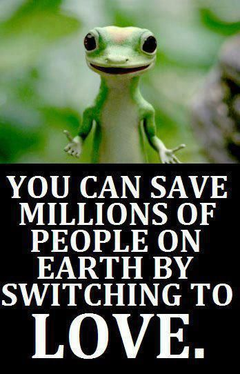 Geico Quotes 16 Best Geico Gecko Images On Pinterest  Geckos Plush And Sweatshirt