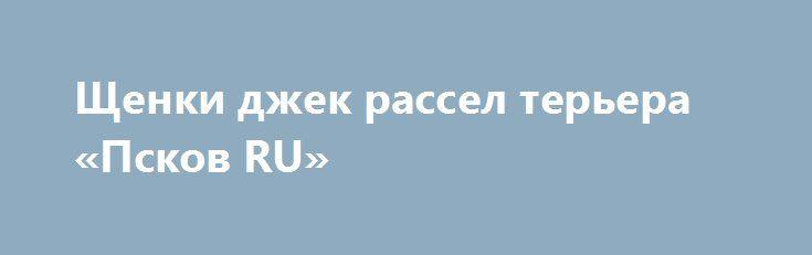 Щенки джек рассел терьера «Псков RU» http://www.pogruzimvse.ru/doska19/?adv_id=715 Питомник Морской каприз предлагает замечательных щенков породы джек рассел терьер, родились 19 июля текущего года. Родословная РКФ, ветеринарный  паспорт, клеймо, на момент продажи будут иметь все прививки по возрасту. Отлично подойдут для участия в выставках и просто в семью.    - Мать: Звездная пыль черри(юный чемпион России, чемпион России).    - Отец: Добрыня Добрынич фром рассел хаус (Юный чемпион России…