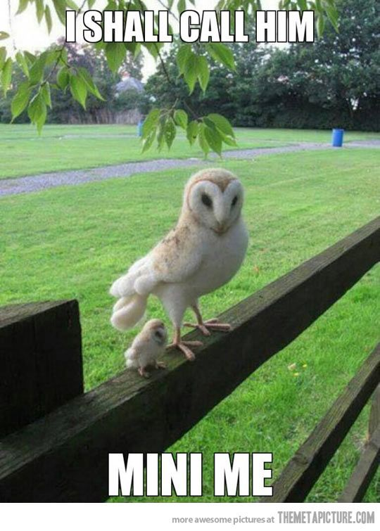 Mini owl. Aww you look cute, adorable, and fluffy