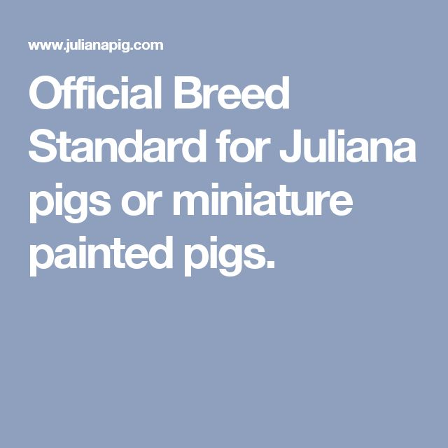 Official Breed Standard for Juliana pigs or miniature painted pigs.
