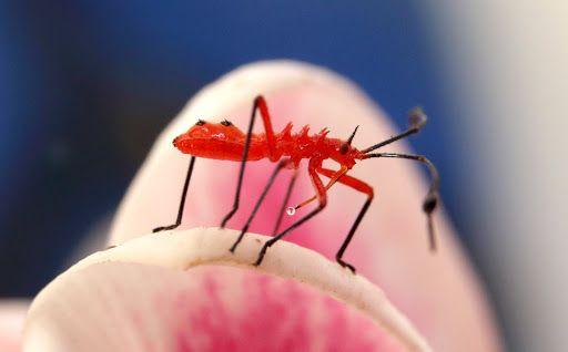 Come in tutti i luoghi esotici, anche a Isla Mujeres si incontrano strani insetti. Ed ecco qui una Ninfa allo stadio giovanile. Per quanto affascinate e simpatico, ci troviamo difronte ad un insett…