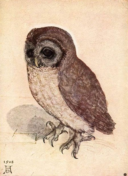'The Little Owl' by Albrecht Dürer: Owl Birds, Artsi Fartsi, Little Owl, Owl Prints, Albrecht Durer, Google Search, Albrecht Dürer, German Artists, Great Grey Owl