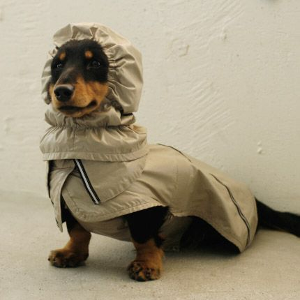 17 Best images about Raincoats for Dogs on Pinterest ...