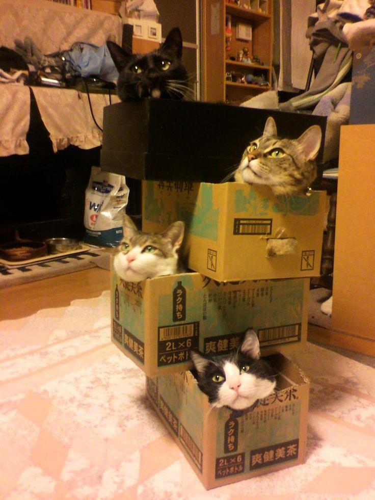 アイリスペットどっとコム/猫といっしょ