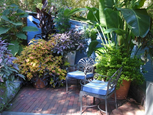 32 best tropical gardening images on pinterest | tropical, gardens ... - Tropical Patio Ideas