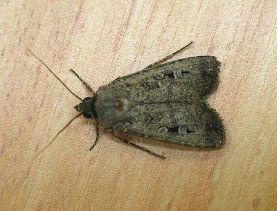 How To Get Rid Of Moths In Your Home Home To Get And