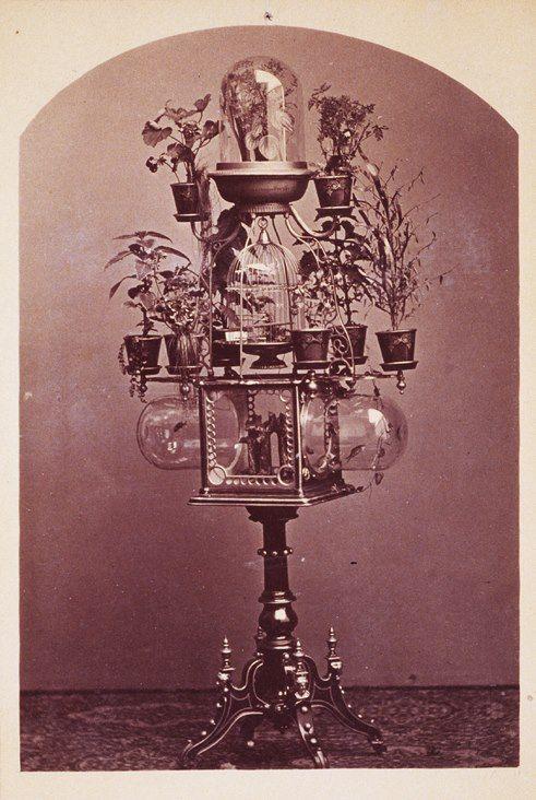 Bird cage, aquarium and plant, 1880