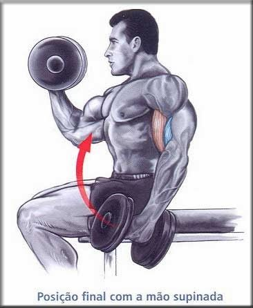 Treino de biceps - Hipertrofia - Treino de biceps - Hipertrofia é um bom programa de treino para desenvolver bíceps grandes e volumosos. Esses exercícios vão trabalhar ambas as cabeças do bíceps braquial de forma intensa.