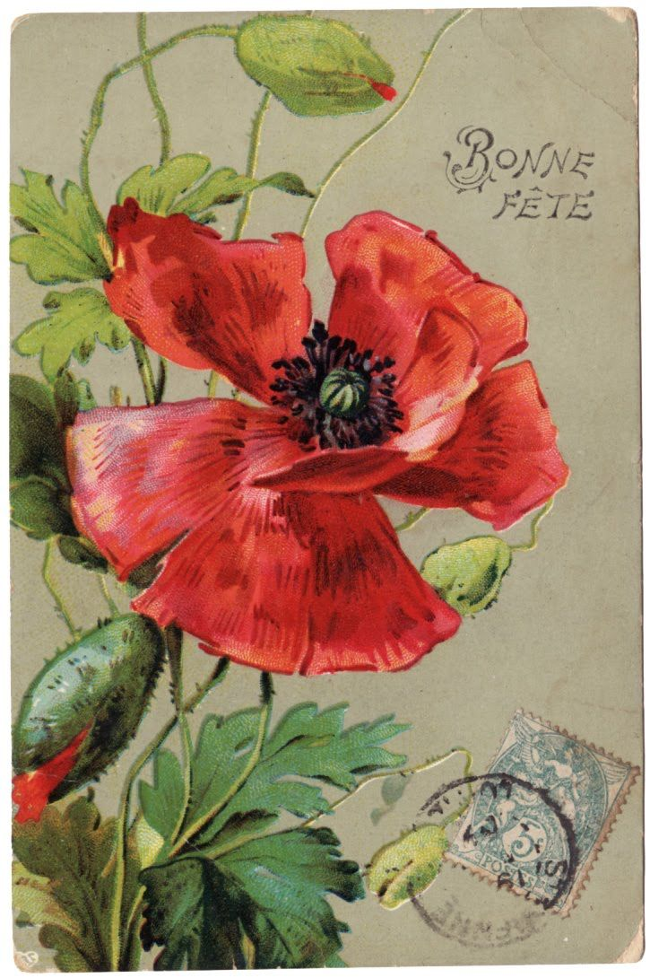 Poppy postcard  Bonne Fete (Happy  Birthday)Freebies Free, Flower Postcards, Vintage Poppies, Printables Design, Poppies Art, Diy Vintage, French Postcards, Free Image, Postcards Freebies
