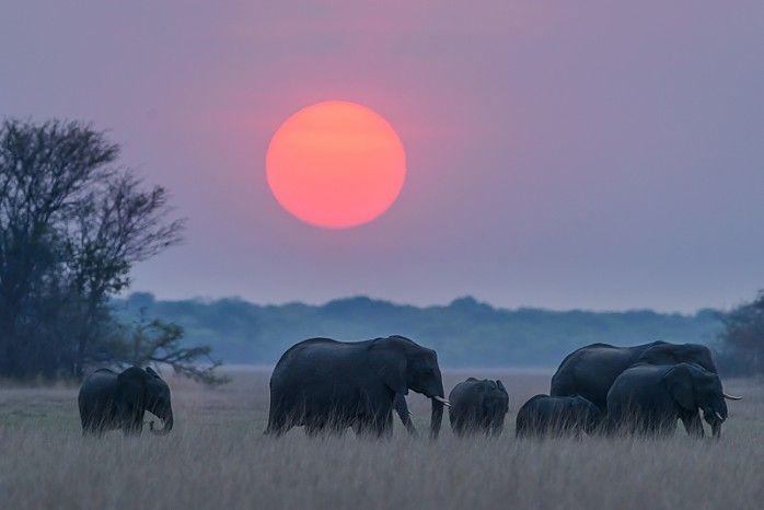 © Shem Compion - Busanga Bush Camp #Kafue #Zambia