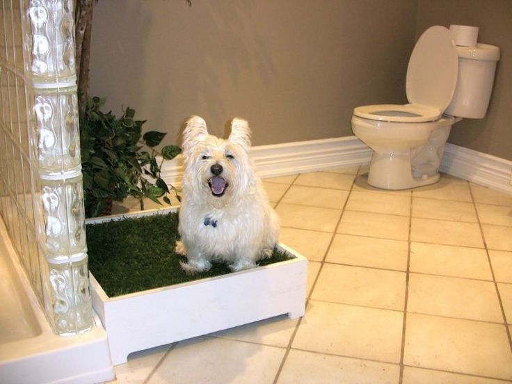Best 25 indoor dog potty ideas on pinterest apartment puppy puppy day care and potty for Training dogs to go to the bathroom outside