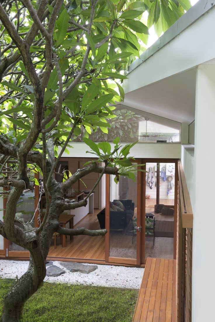 View of the cranked roof extension around the existing Frangipani trees. Brooke Aitken Design