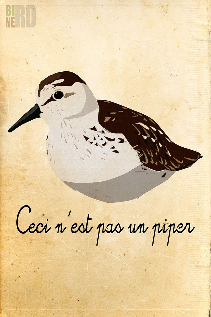 Ceci n'est pas un piper, show the Bird Nerd in you with this funny bird pun tee shirt