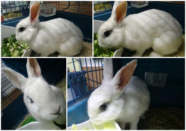 [AAE Cerco casa] Willow è una coniglietta di due anni che cerca casa: adottatela!