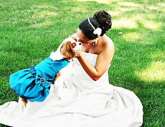 OMG. Dog wedding dresses!! Would you put your pet in one?! Dog Pet Dresses: Custom Wedding Colors -$25.00