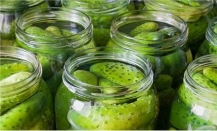 pickles and fermentation essay Pickling is the process of preserving or expanding the lifespan of food by either  anaerobic fermentation in brine or immersion in vinegar the resulting food is  called a pickle, or, to prevent ambiguity, prefaced with.