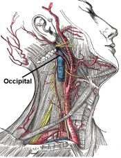 Occipital neuralgia can be confused with a migraine, or other types of headache, because the symptoms can be similar. I think I have this!!!