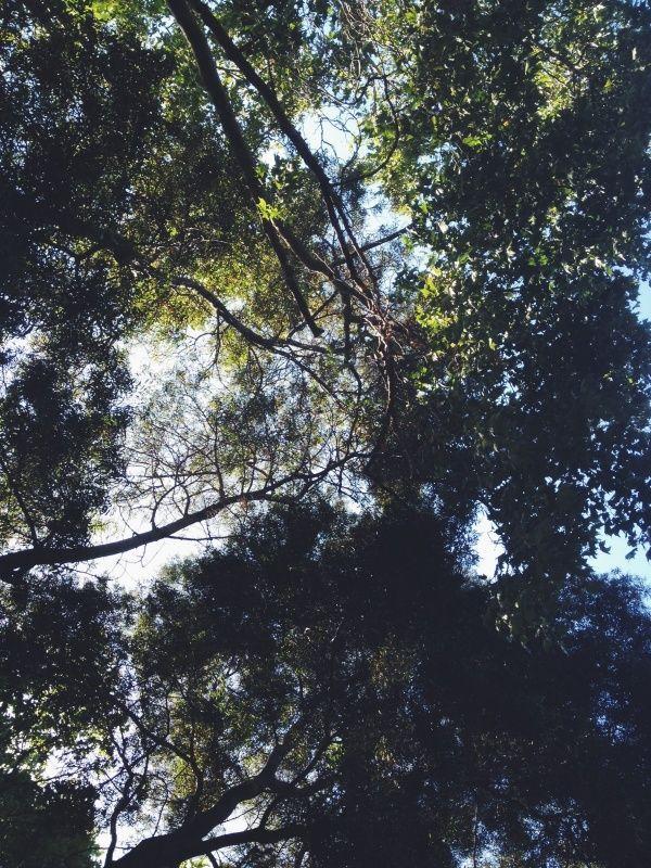 Árboles, Parque O'Higgins, Santiago, Chile.