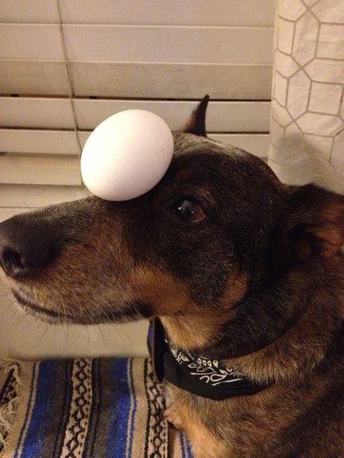 Jack le chien équilibriste   jack le chien equilibriste 12