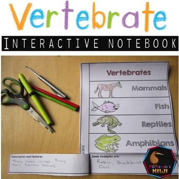 This is a revision tool for elementary students to revise types of Vertebrates. It is an interactive notebook where students write in information about vertebrates: Mammals, Fish, Reptile, Bird, Amphibians.PURPOSE OF THIS RESOURCEA great revision tool for vertebrate knowledge once students have studied types of vertebrates and features of eachStudents write in features of vertebrates and give examples of  it.